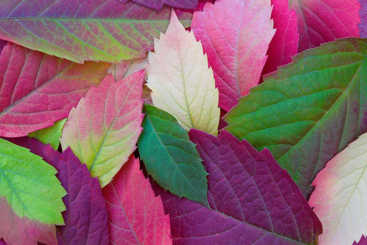 Календарь красоты на 16 — 22 сентября