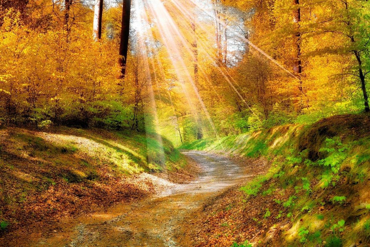 Календарь красоты на 11 — 17 ноября
