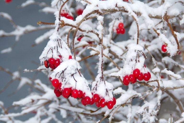 Календарь красоты на 16 – 22 декабря