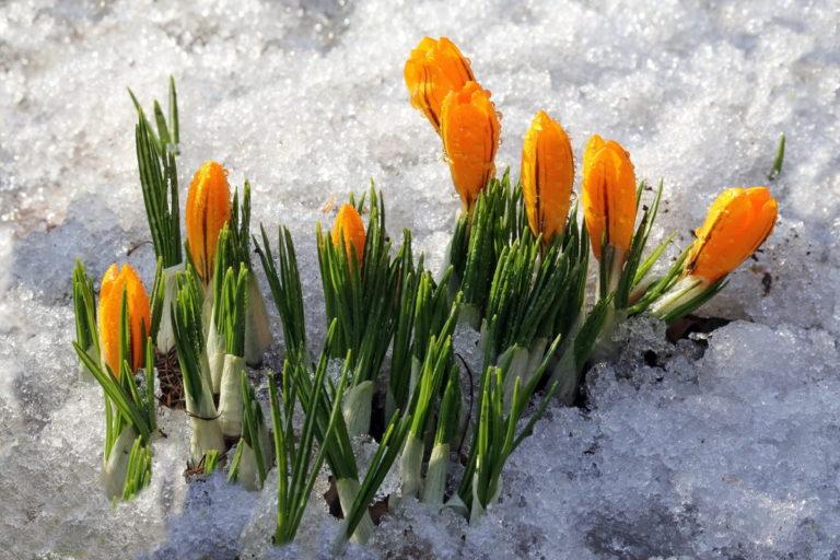 Астрологический прогноз на март