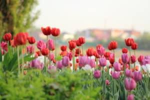 Астрологический прогноз на 04 — 10 мая