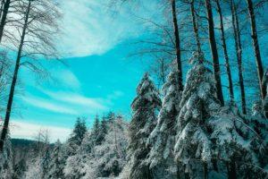 Астрологический прогноз на 25 — 31 января