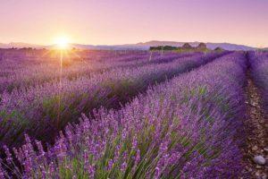 Календарь красоты на 02 — 08 августа 2021